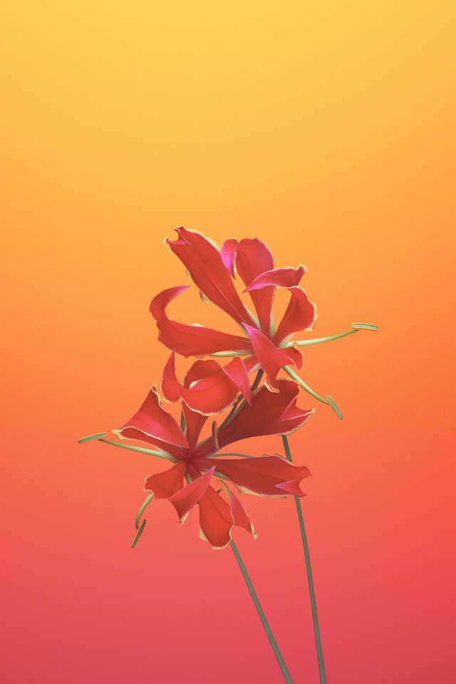 Flower GLORIOSA Android wallpaper