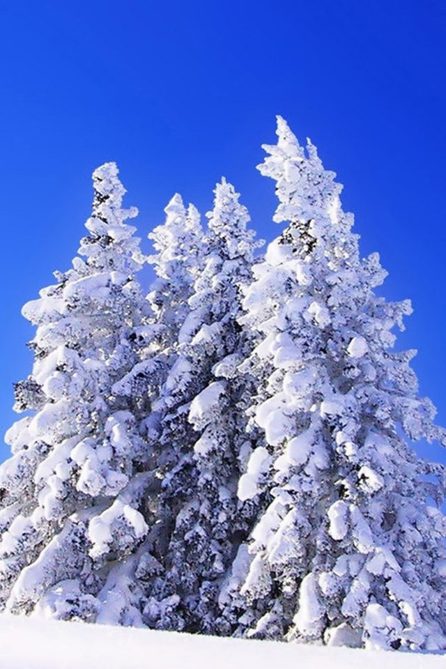 Great Blue Sky in Winter Android wallpaper