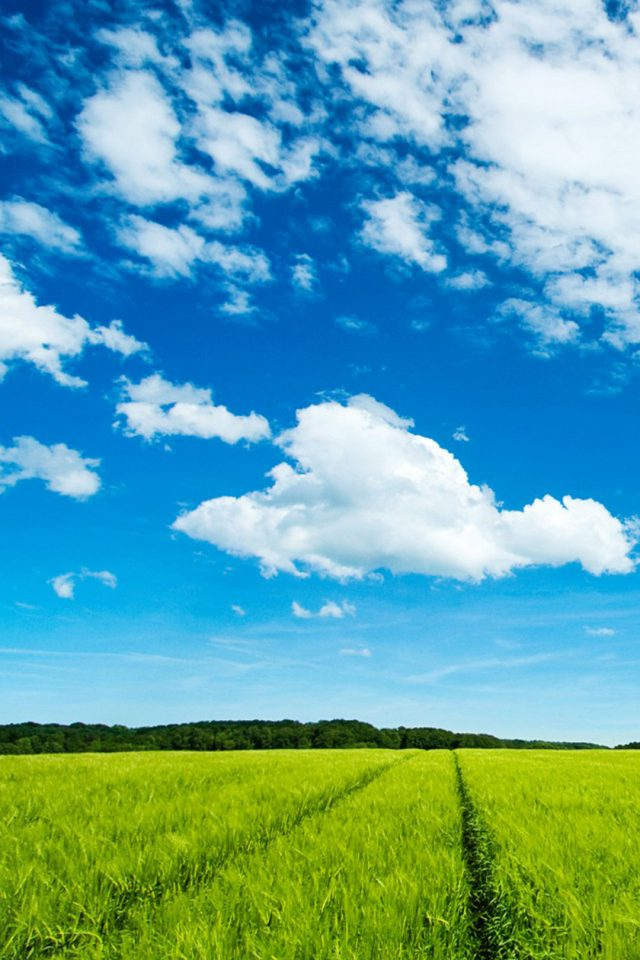 Great Sky And Grass Android wallpaper