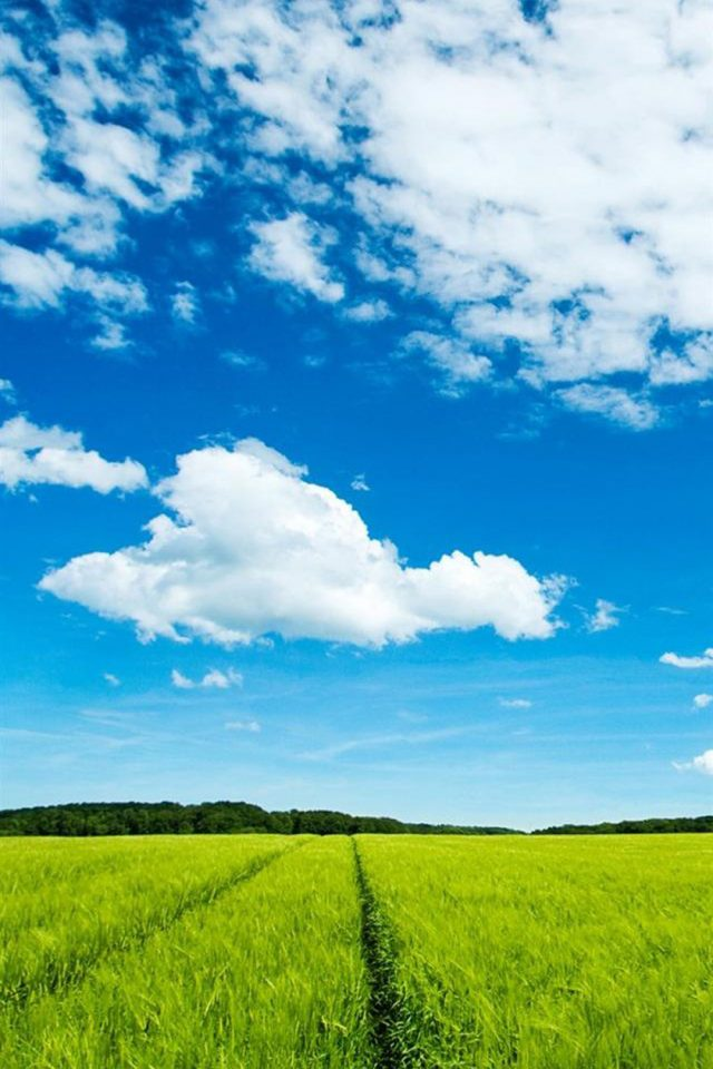 Sky Grass Android wallpaper