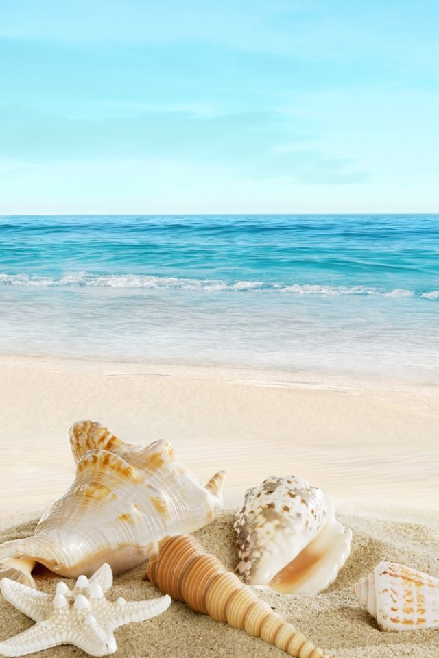 Landscape with shells on tropical beach Android wallpaper