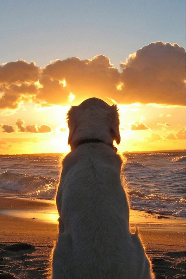Dog on the beach Android wallpaper