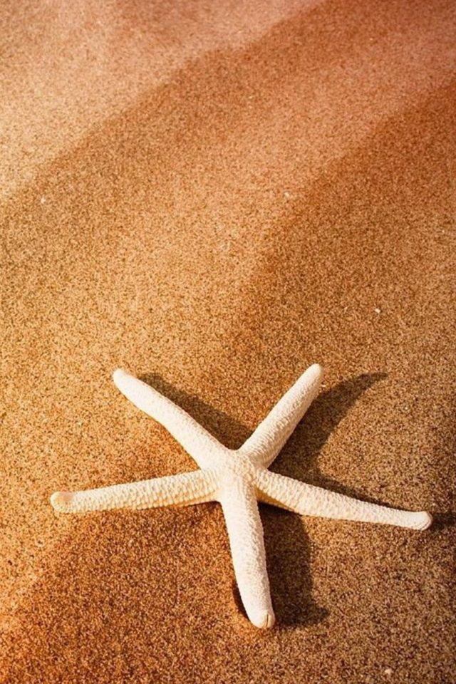 Beach Seastar Android wallpaper