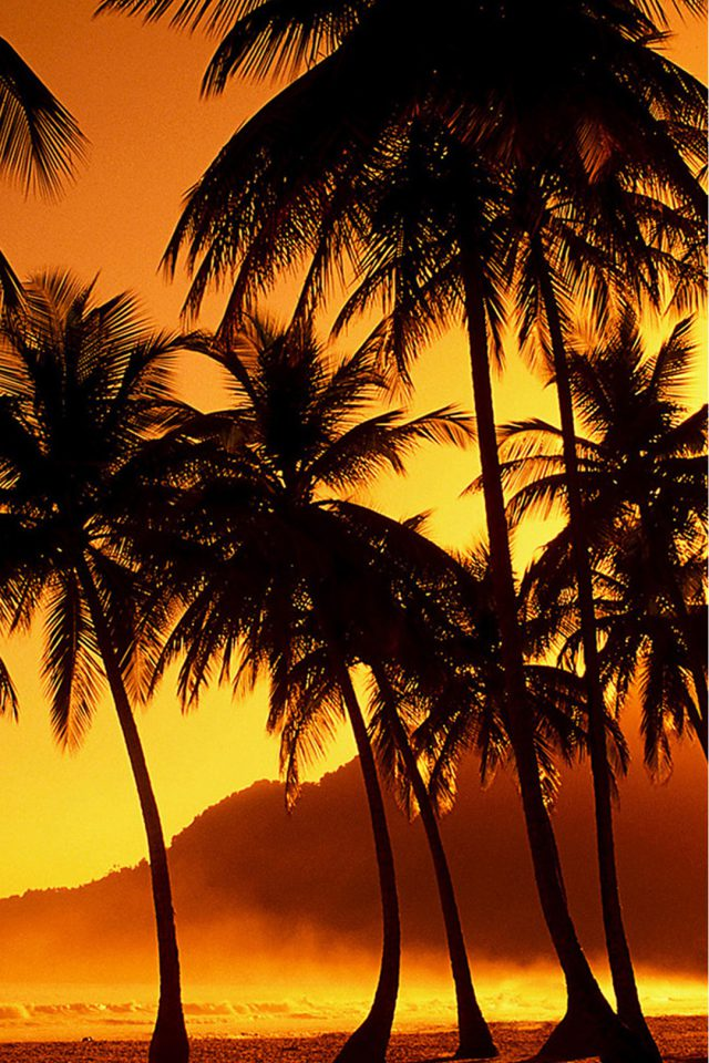 Palm Trees at Beach Android wallpaper