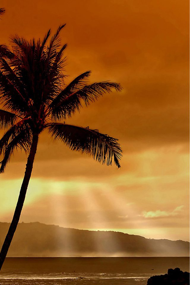 Beach Palm Trees Android wallpaper