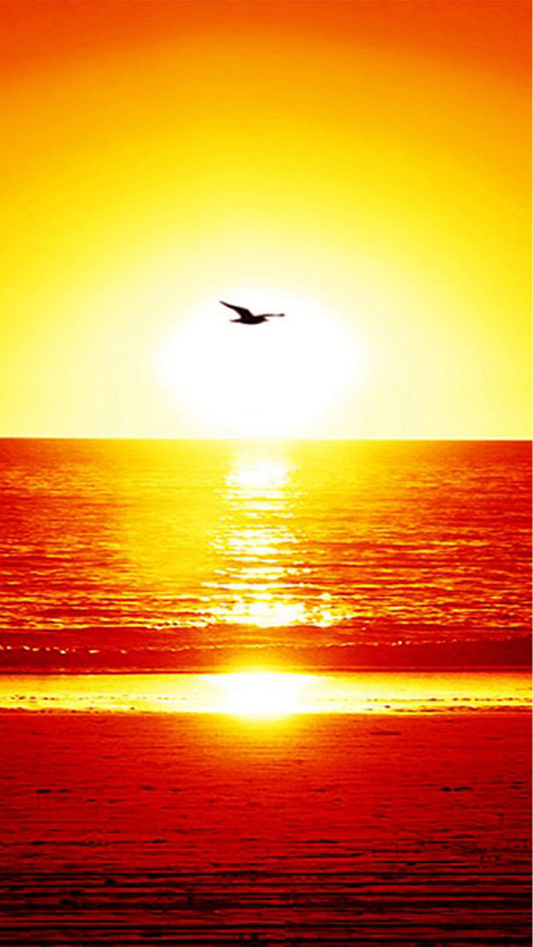 Beach Seagull Sunset Android wallpaper