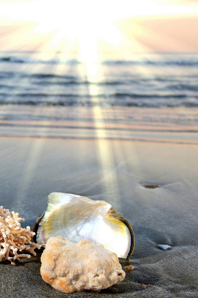 Dawn beach shells Android wallpaper