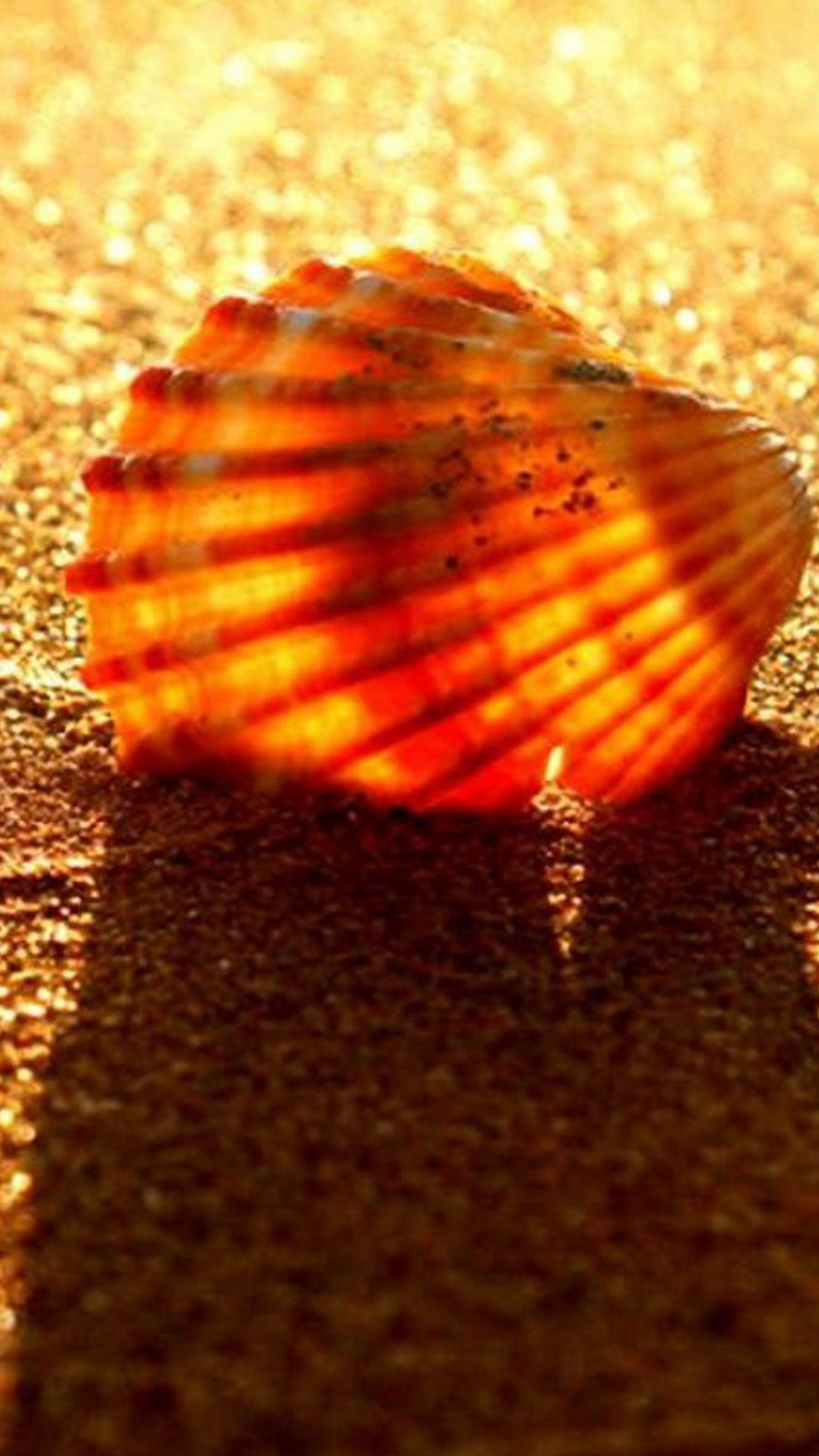 Golden Beach Shell Android wallpaper