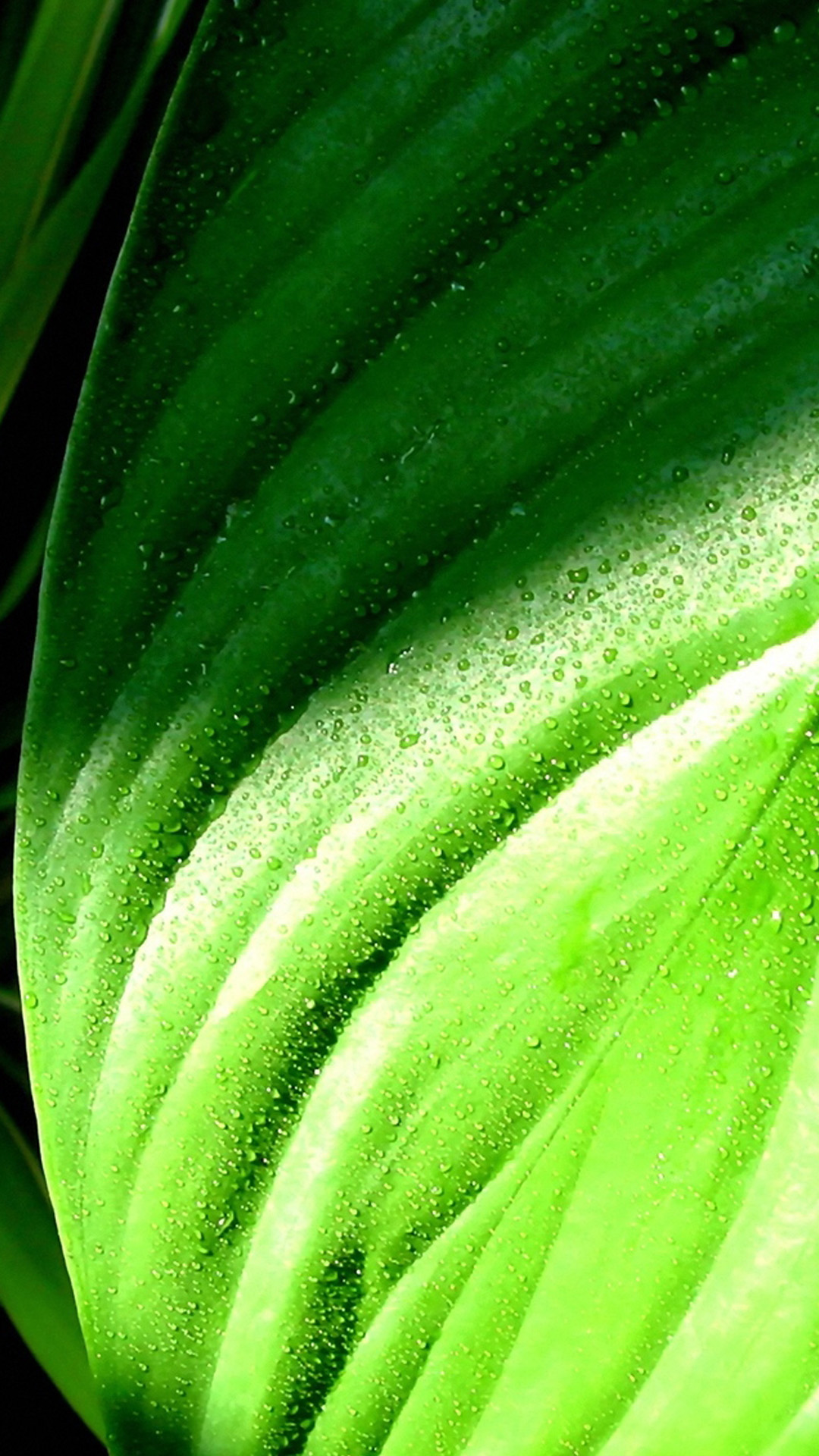 green-leaves-with-rain-drops Android wallpaper