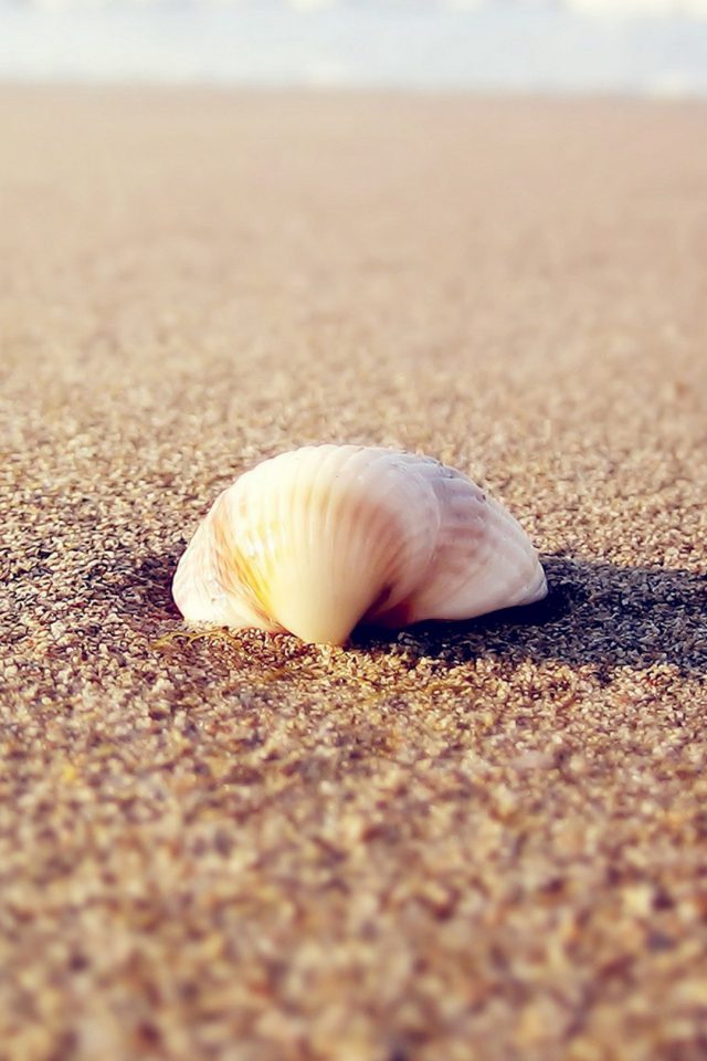 HD beach shells Android wallpaper