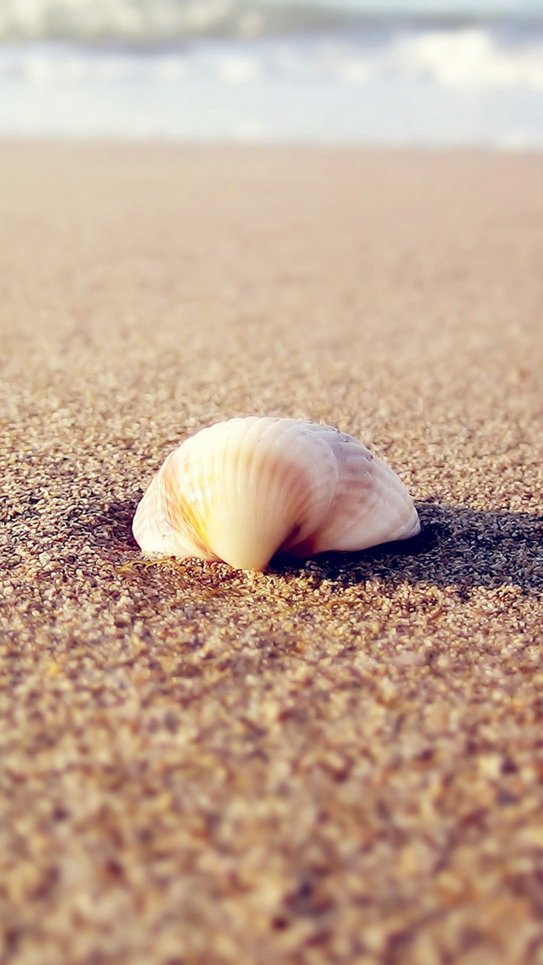 HD beach shells Android wallpaper - Android HD wallpapers