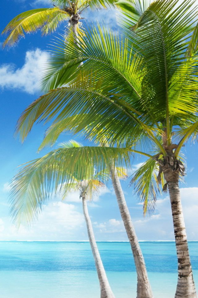 Caribbean sea and coconut palms Android wallpaper