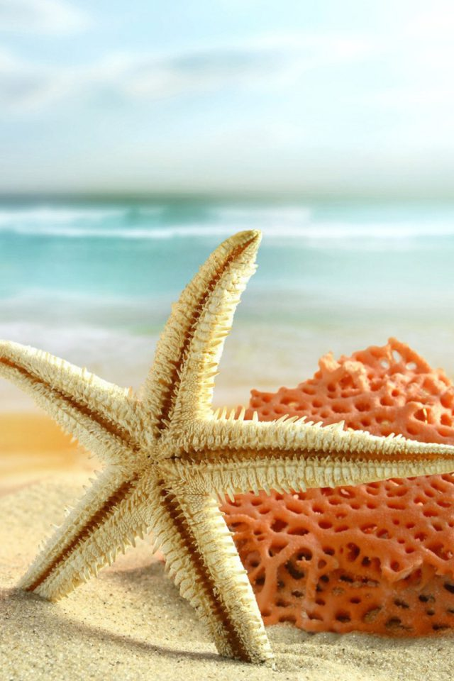 Starfish beach toys Android wallpaper