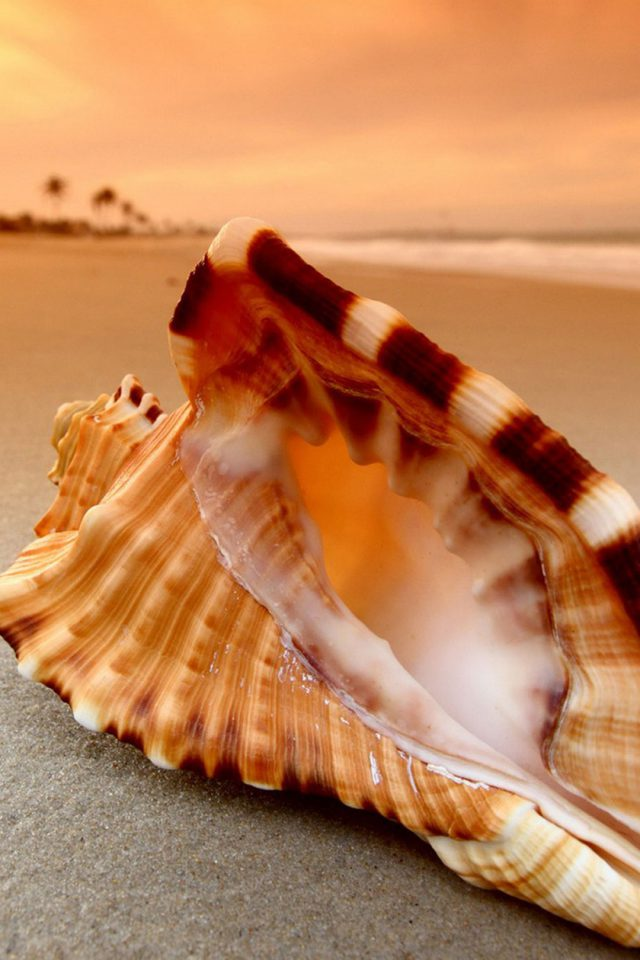 Sunset Beach Shell Android wallpaper