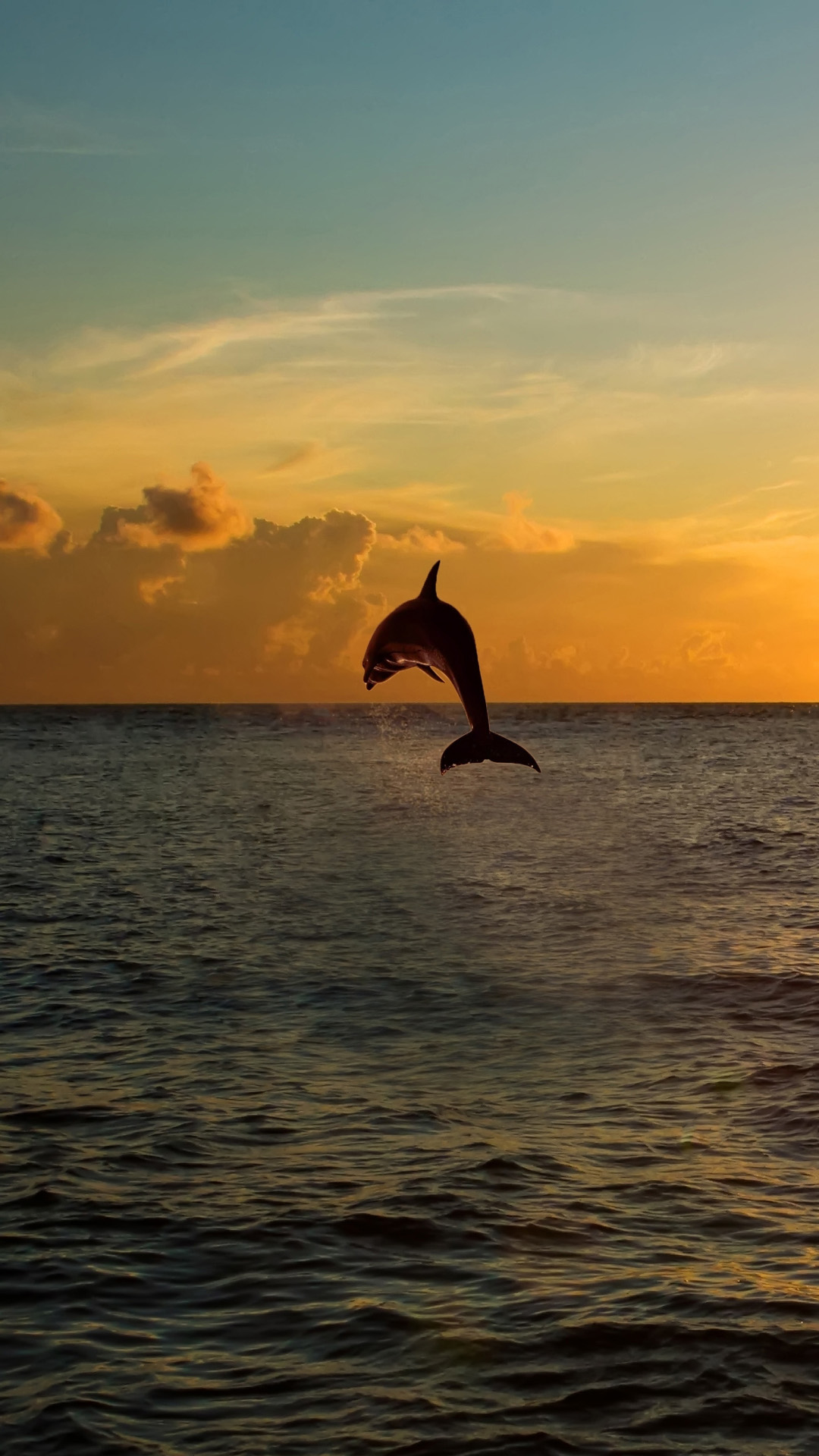 Dolphin Jumping Out Of The Sea In Florida Android Wallpaper