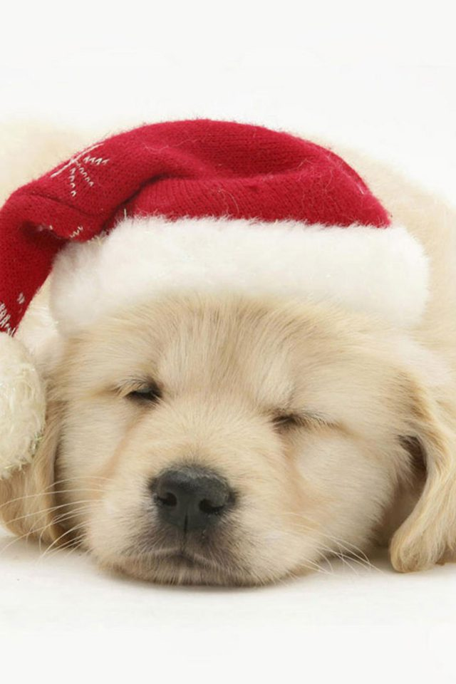 Puppy Christmas Android wallpaper