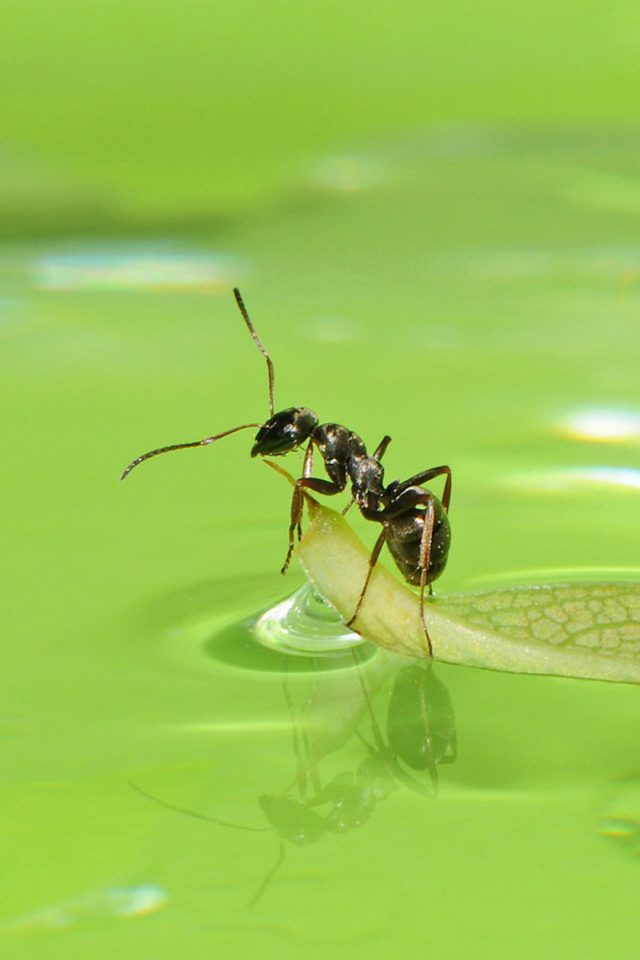 Ants HD Android wallpaper