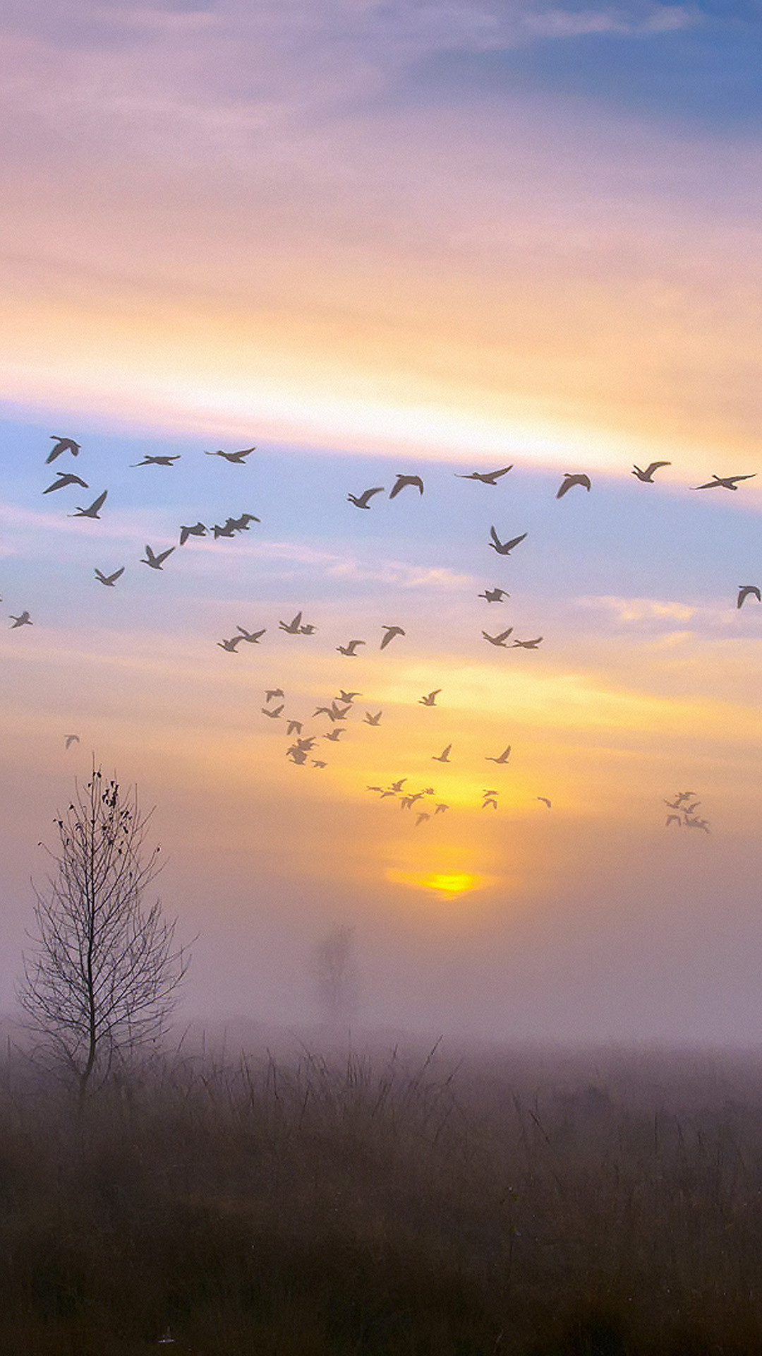 Autumn Dusk Geese Android wallpaper