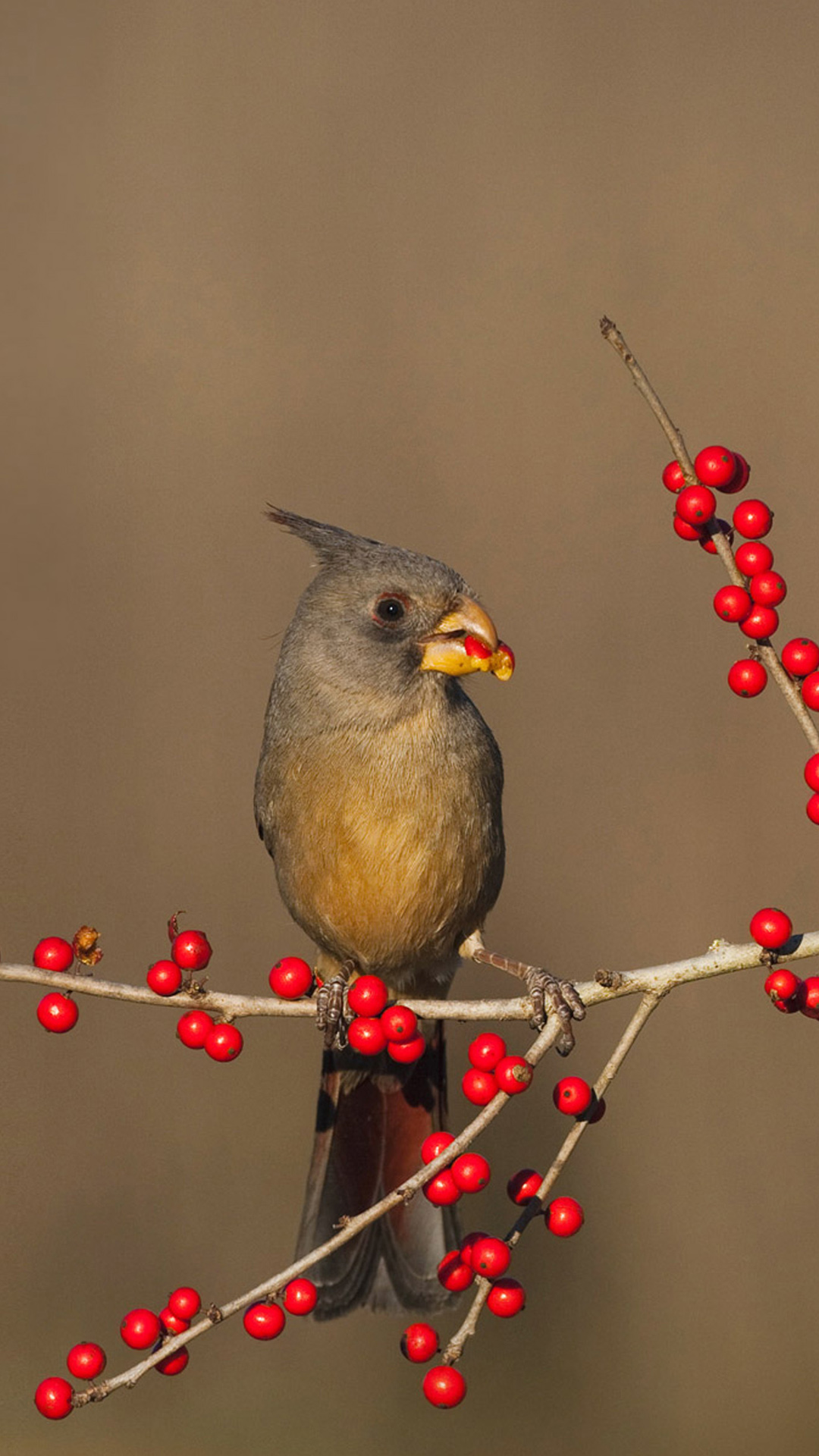 free foraging birds