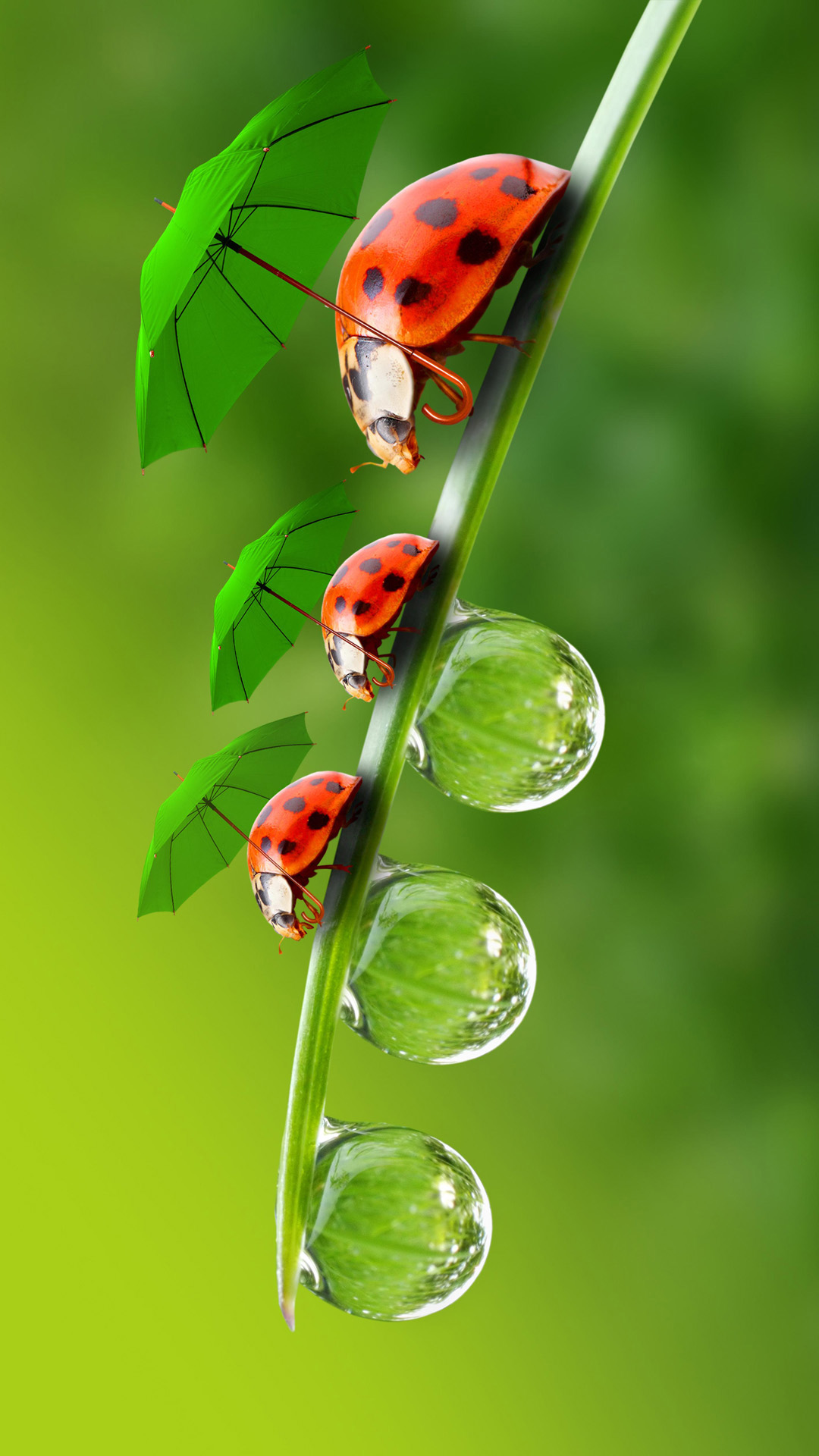 hd interesting beetle android wallpaper - android hd wallpapers