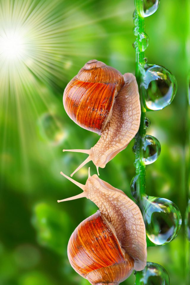 HD Loving Snail Android wallpaper