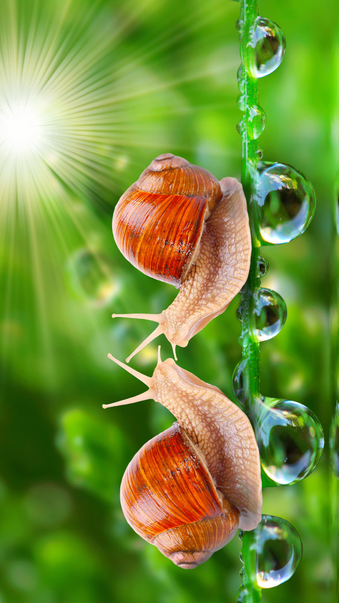 hd loving snail android wallpaper - android hd wallpapers