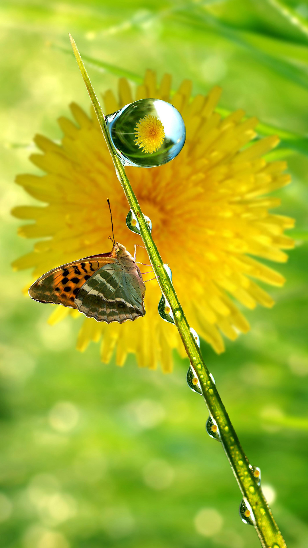 hd spring butterfly drops