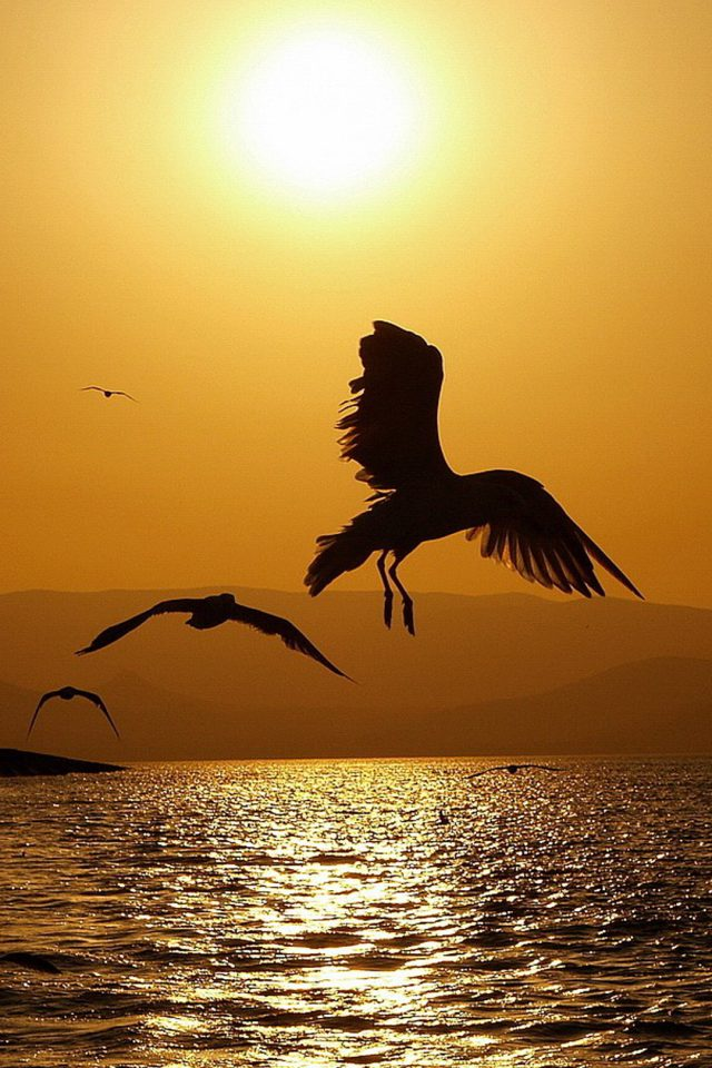 Perfect Sunset Seagull Android wallpaper