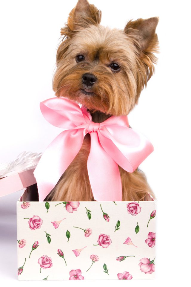 Puppy Gift Ideas Android wallpaper