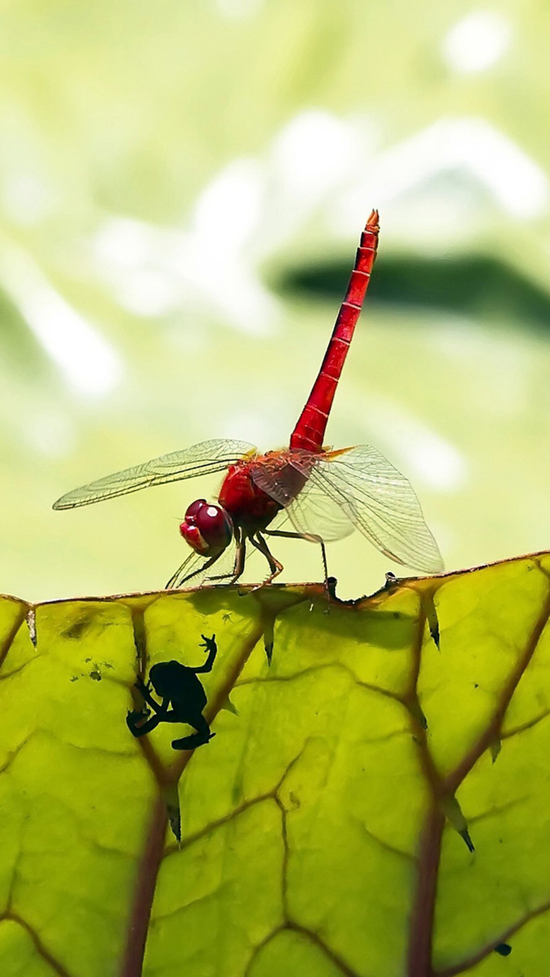 Red dragonfly android wallpaper android hd wallpapers - Free dragonfly wallpaper for android ...