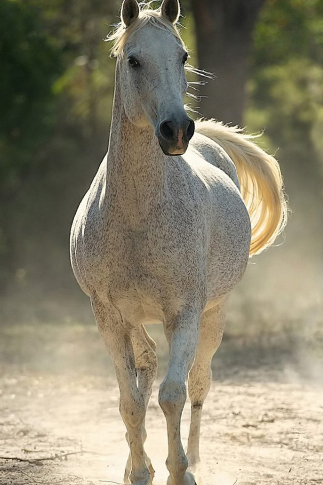 Running Horse Android wallpaper