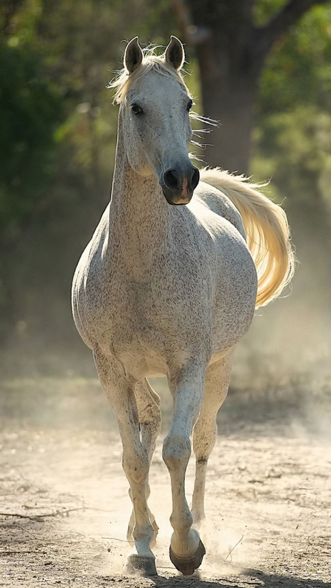Running Horse Android Wallpaper Android Hd Wallpapers