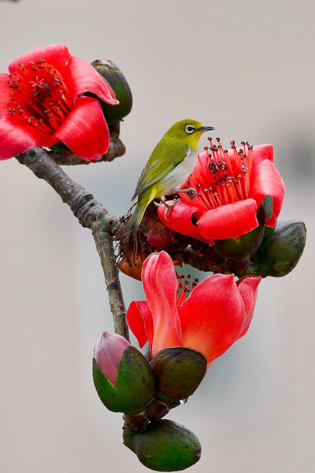 Spring Flowers Bird Android wallpaper