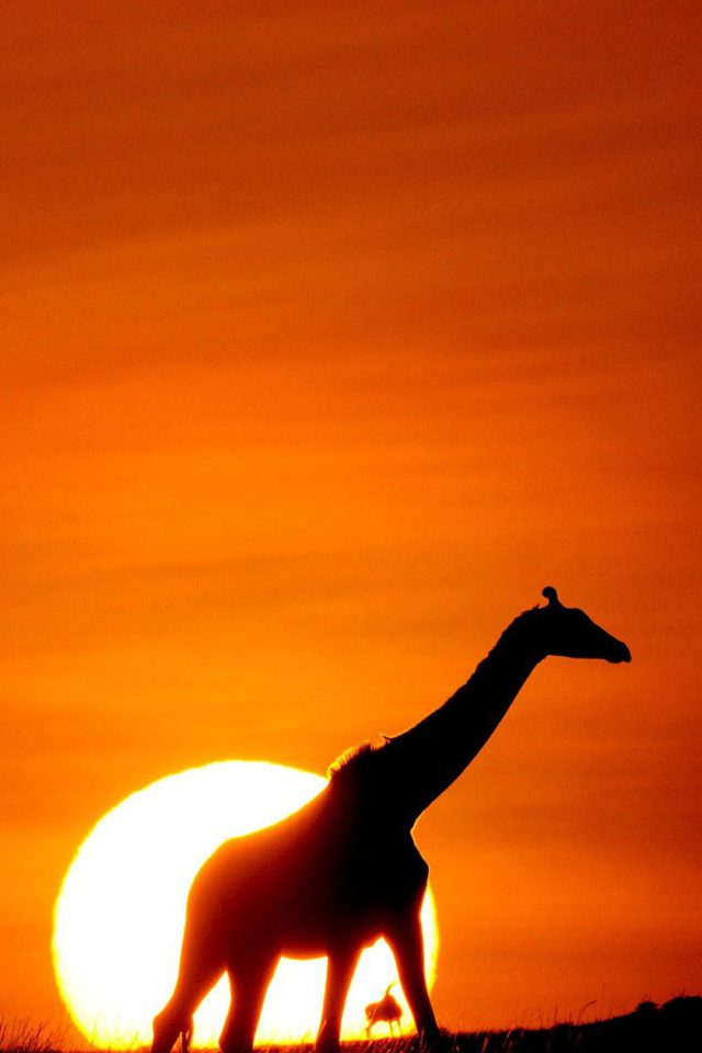 Sunset Giraffe Android wallpaper