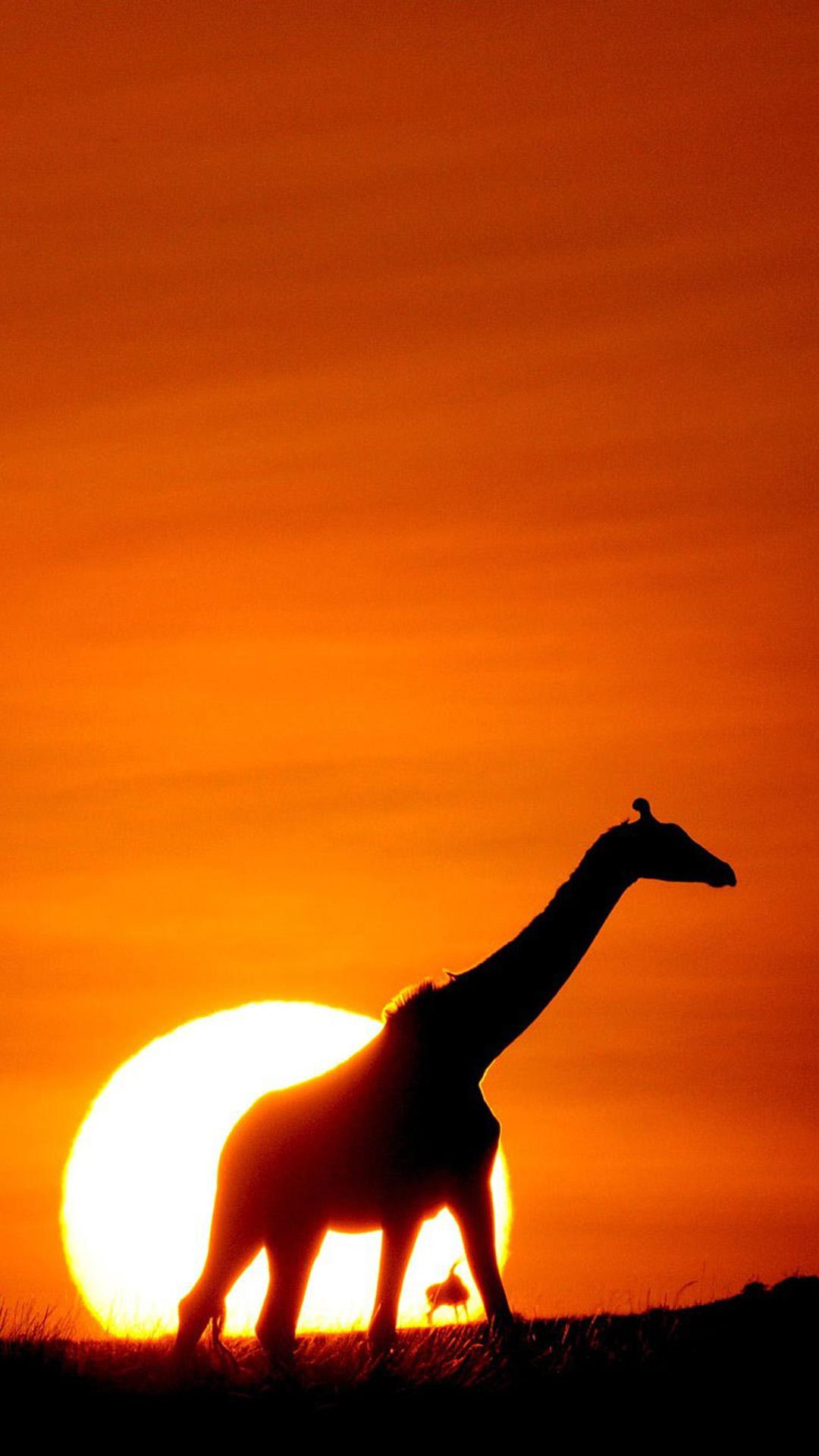 Download Wallpaper Colorful Giraffe - Sunset-Giraffe  Picture_771192 .jpg