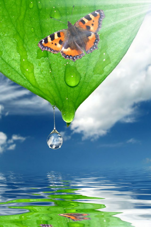 Sunshine Green Leaf Butterfly Android wallpaper