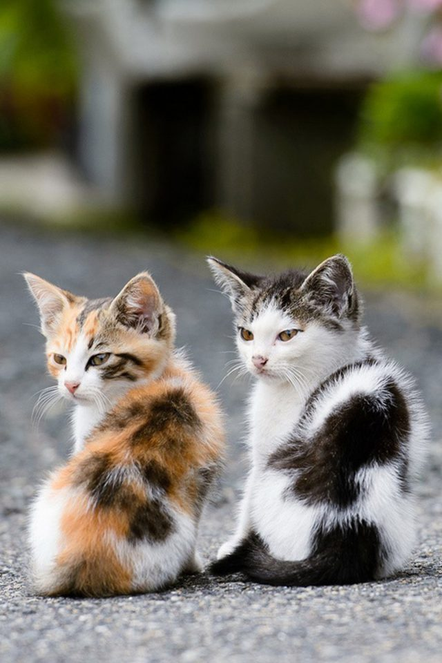 Two Very Cute Cats Android wallpaper
