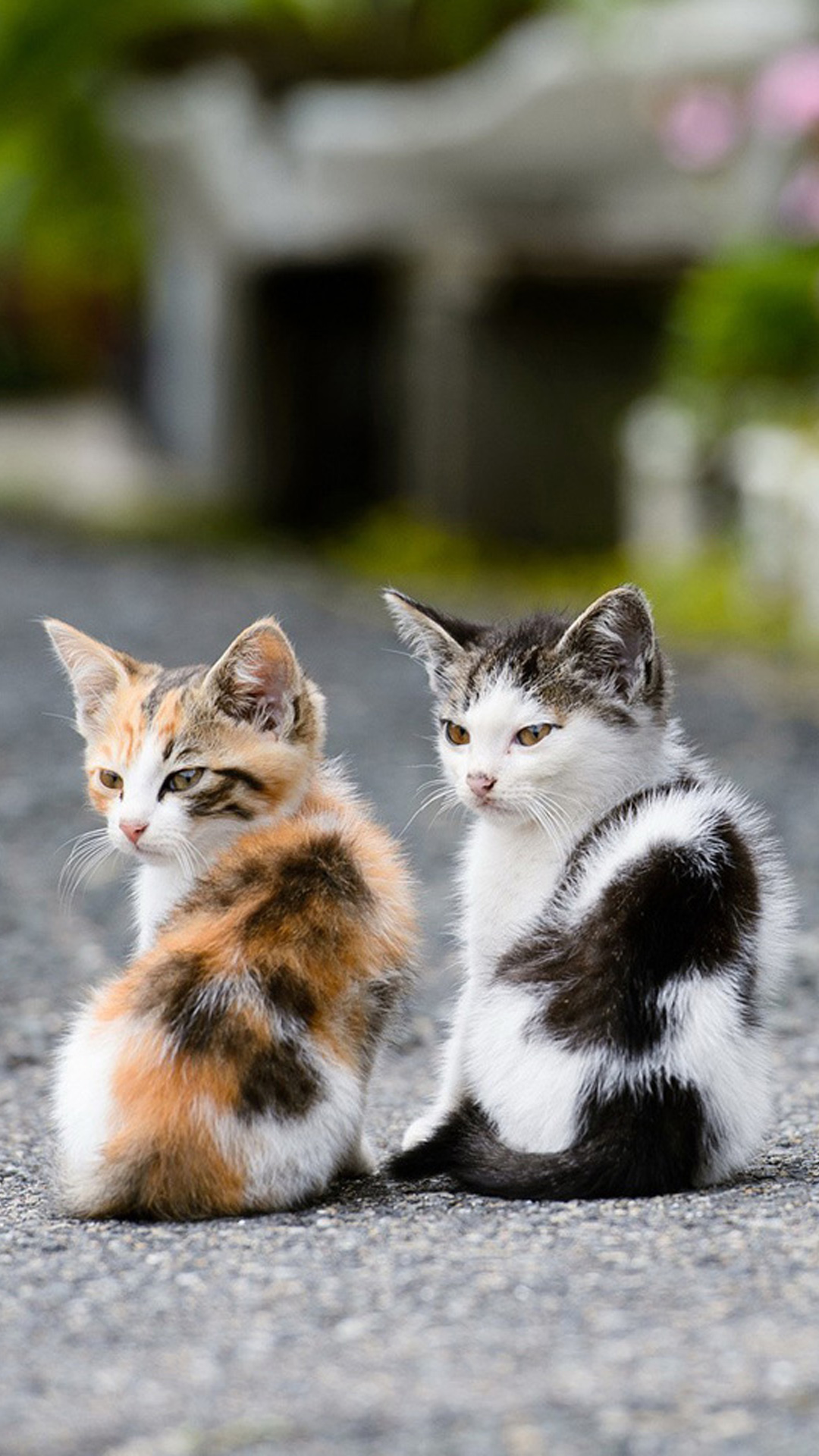 Two Very Cute Cats Android Wallpaper Android Hd Wallpapers