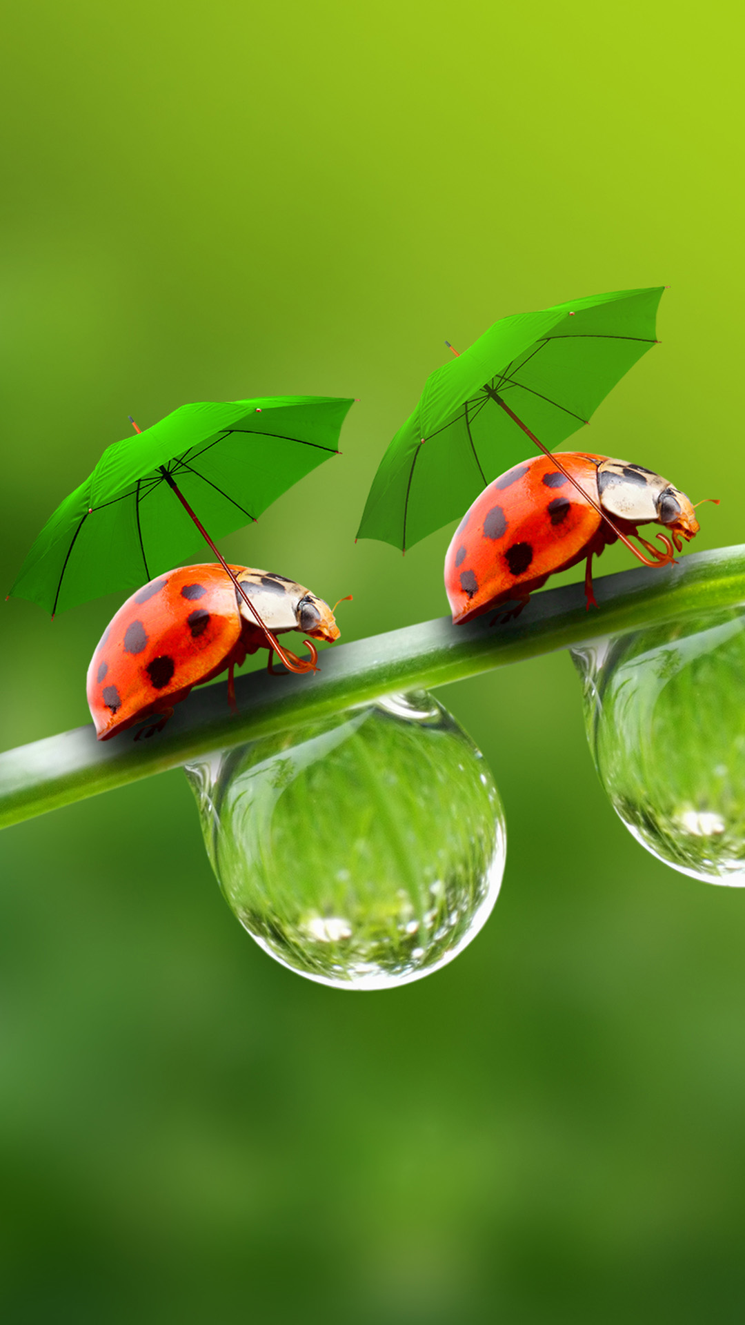 umbrella beetle android wallpaper - android hd wallpapers