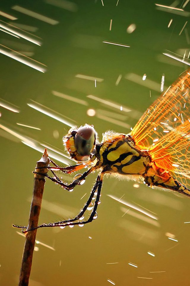 Wind Dragonfly Android wallpaper