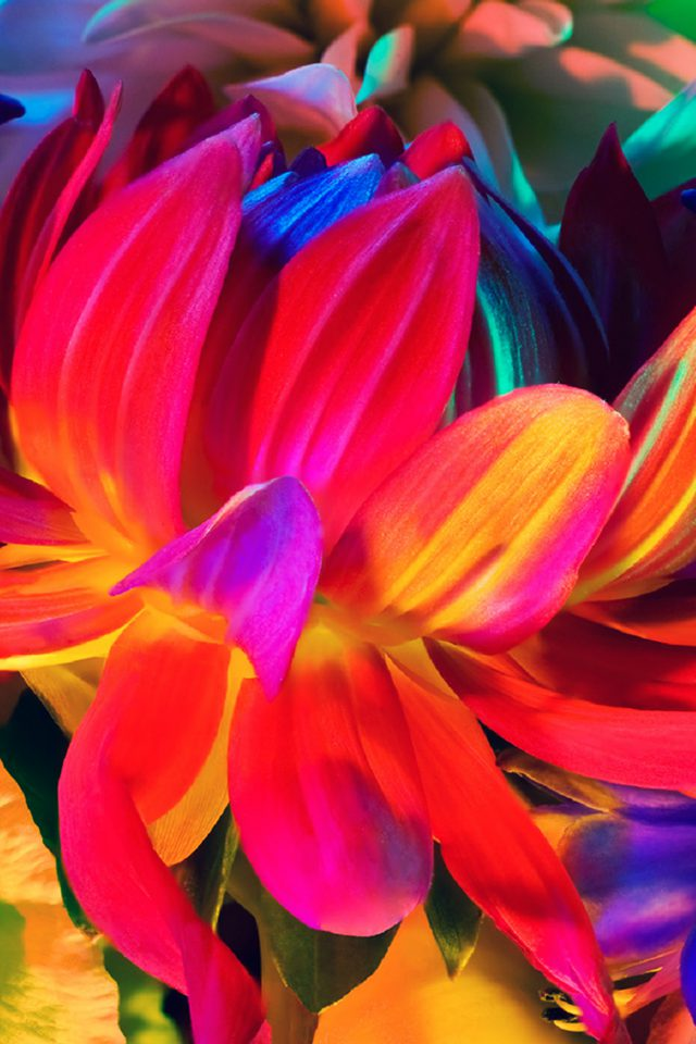 Apple MacBook Flower Rainbow Color Illustration Art Nature Android wallpaper
