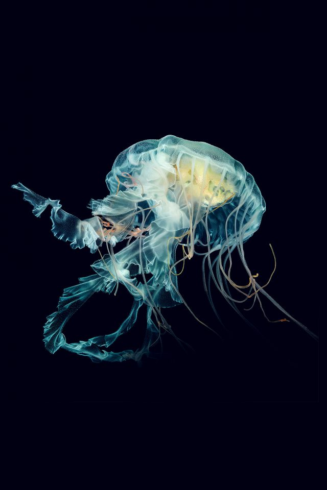 Apple Watch Wallpaper Jellyfish Art Nature Blue Android wallpaper