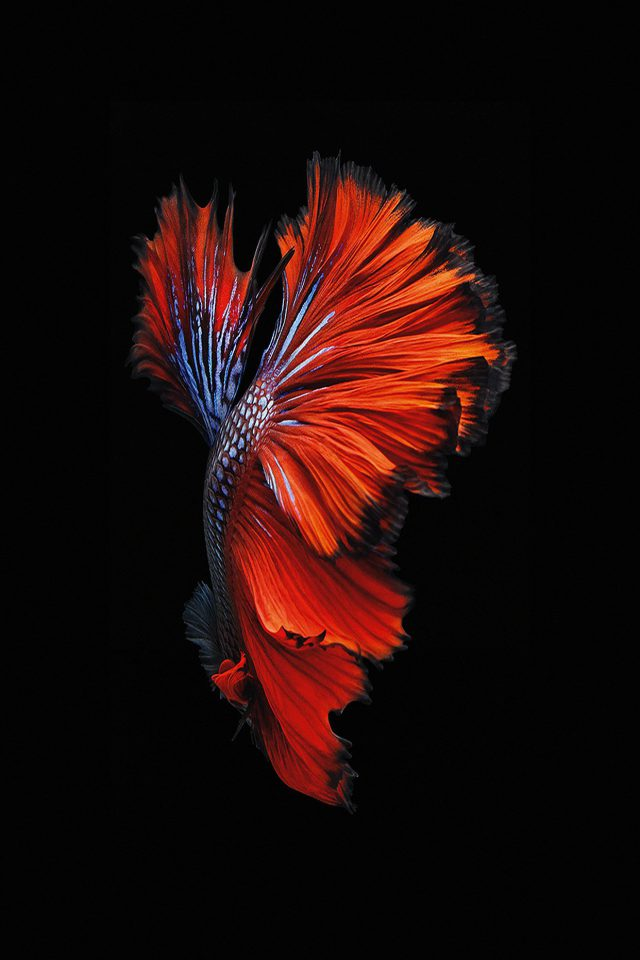 Apple IOS9 Fish Live Background Dark Red Android wallpaper