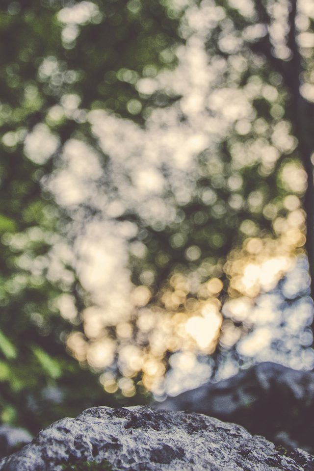 Bokeh Forest Tree Ales Krivec Android wallpaper
