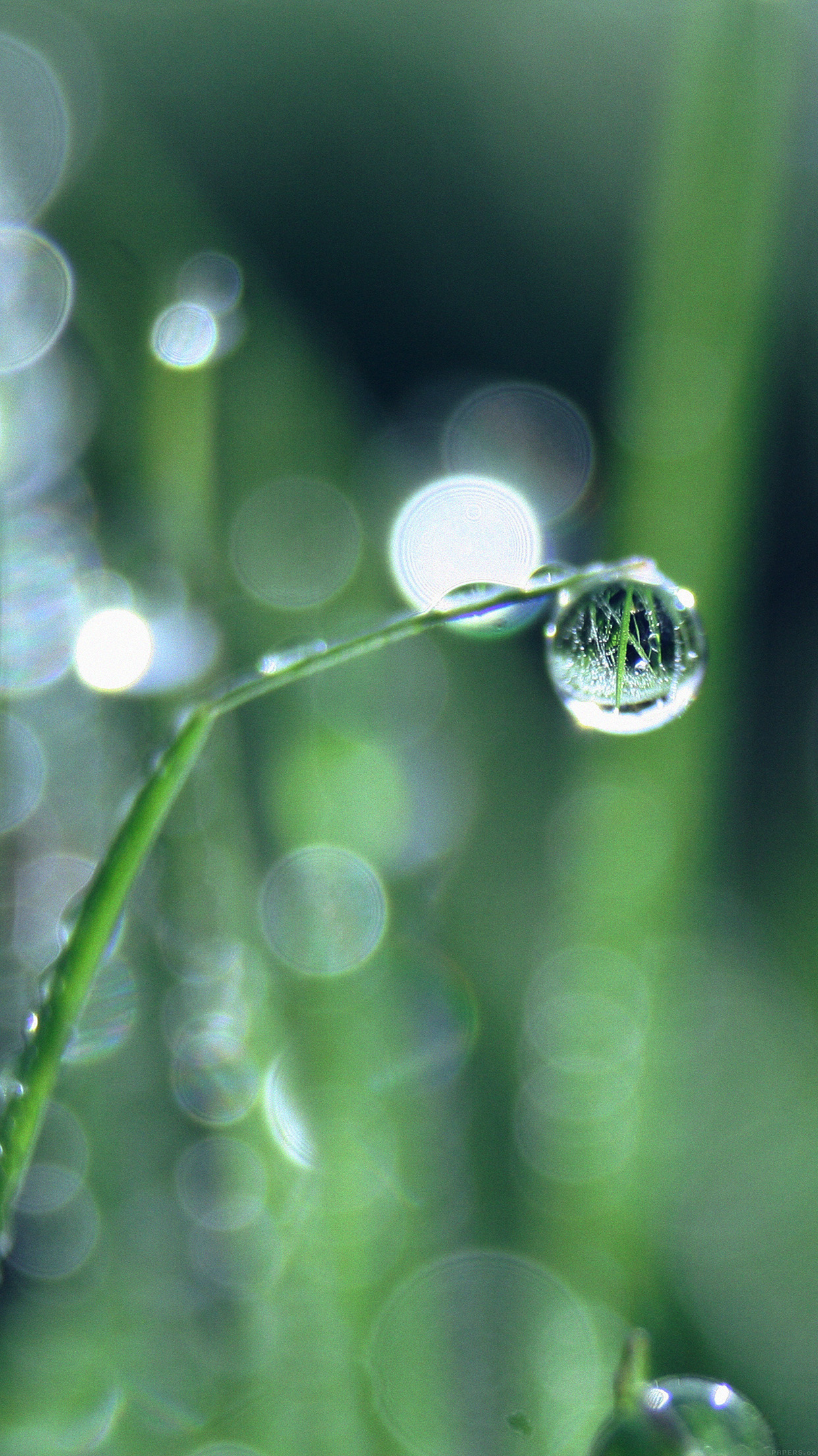 Bokeh Leaf Raindrop Nature Pure Android wallpaper