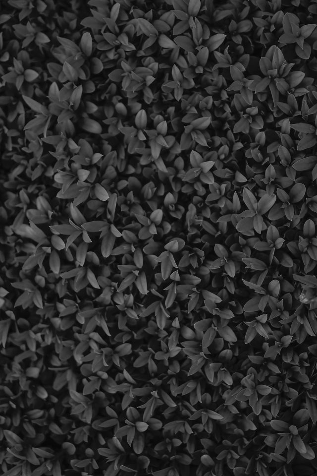 Nature Dark Bw Leaf Grass Garden Flower Pattern Android wallpaper