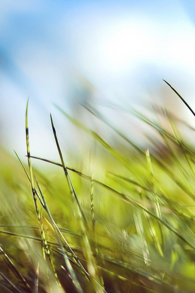 Nature Green Grass Bokeh Summer Android wallpaper