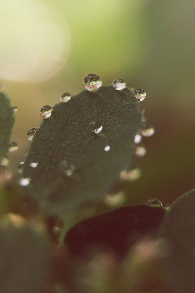Nature Morning Dew Leaf Flower Rain Android wallpaper