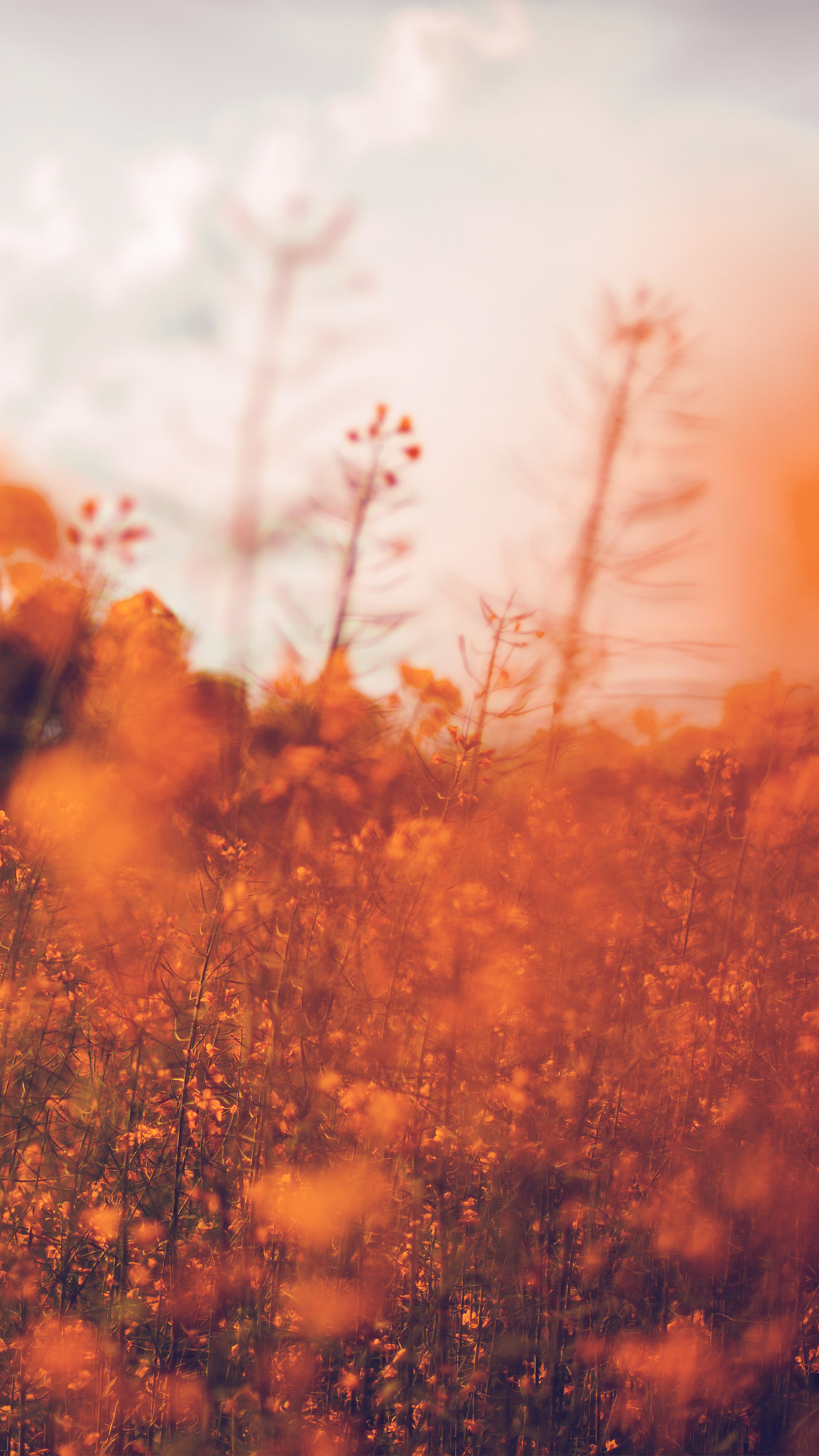 Nature Orange Flower Bokeh Spring Happy Android wallpaper