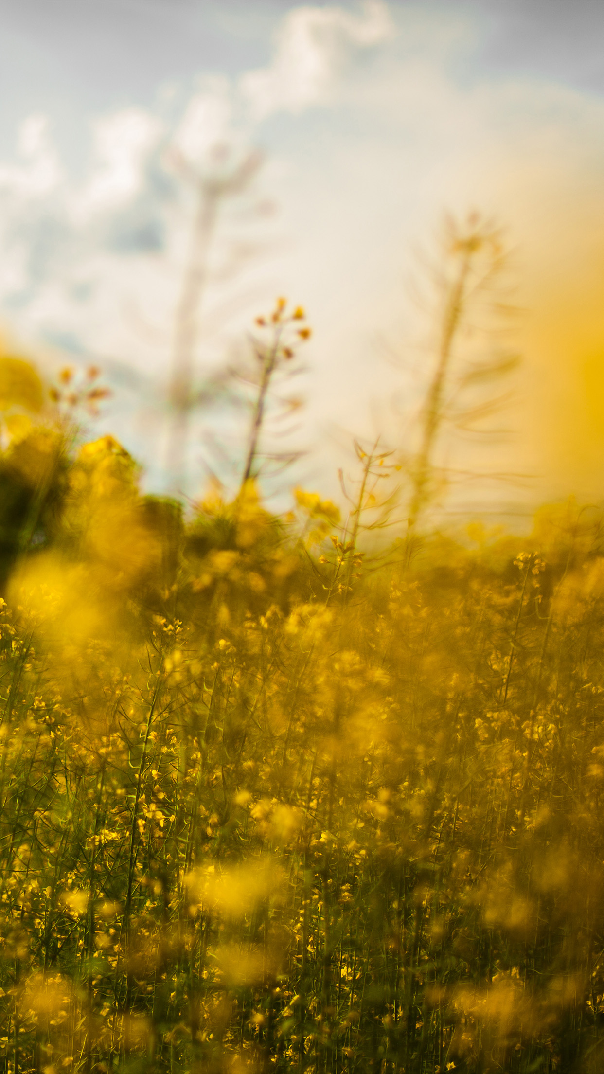 Nature Yellow Flower Bokeh Spring Happy Android wallpaper